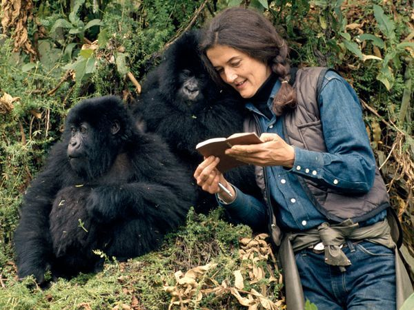 The woman who gave her life to save the gorillas