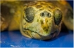Loggerhead sea turtle has died