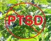 marijuana helps PTSD