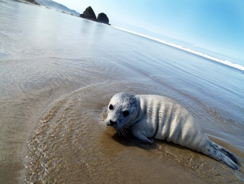 Sea lion pup on beach