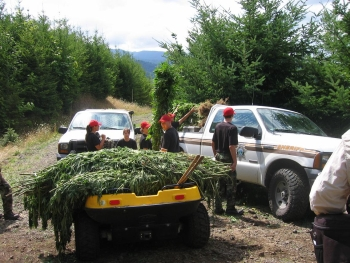 Linn County Oregon Marijuana