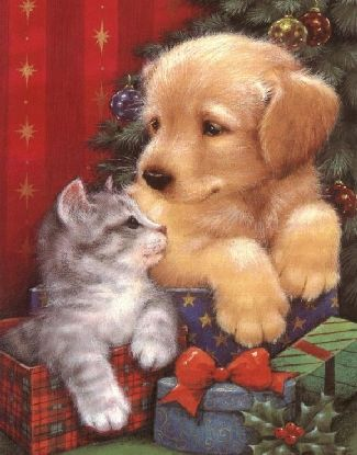 Christmas Puppies And Kittens Images Amp