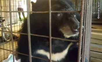 Solitary bear rescued in Vietnam