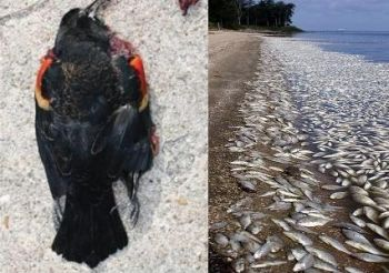 Dead birds and fish in Arkansas