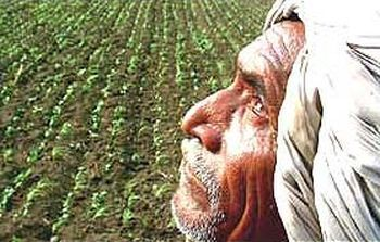 farmer suicides and agrarian distress Farmers' suicide in india: agrarian crisis the farmer's movement was also loosing in the last five years india has witnessed unprecedented agrarian distress.