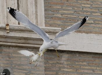 Bird attacking bird at Vatican