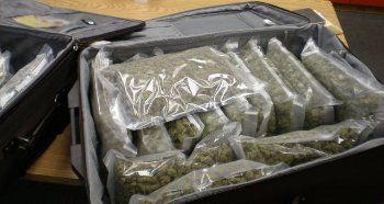 Nearly 23 pounds of Marijuana seized by OSP