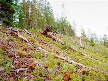Siberian landscape flattened by the Tunguska Event