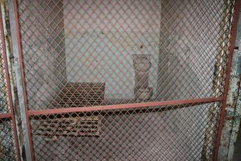 A preserved cell on death row